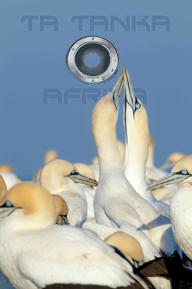 Sea Birds.