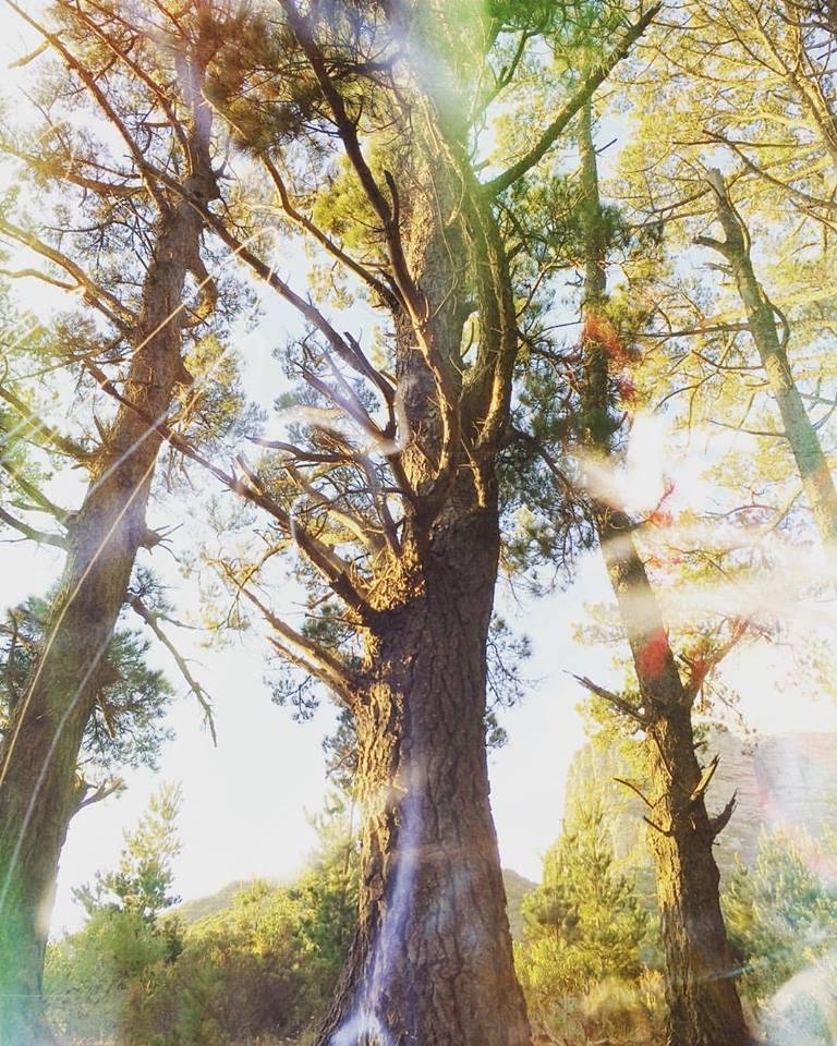Trees art