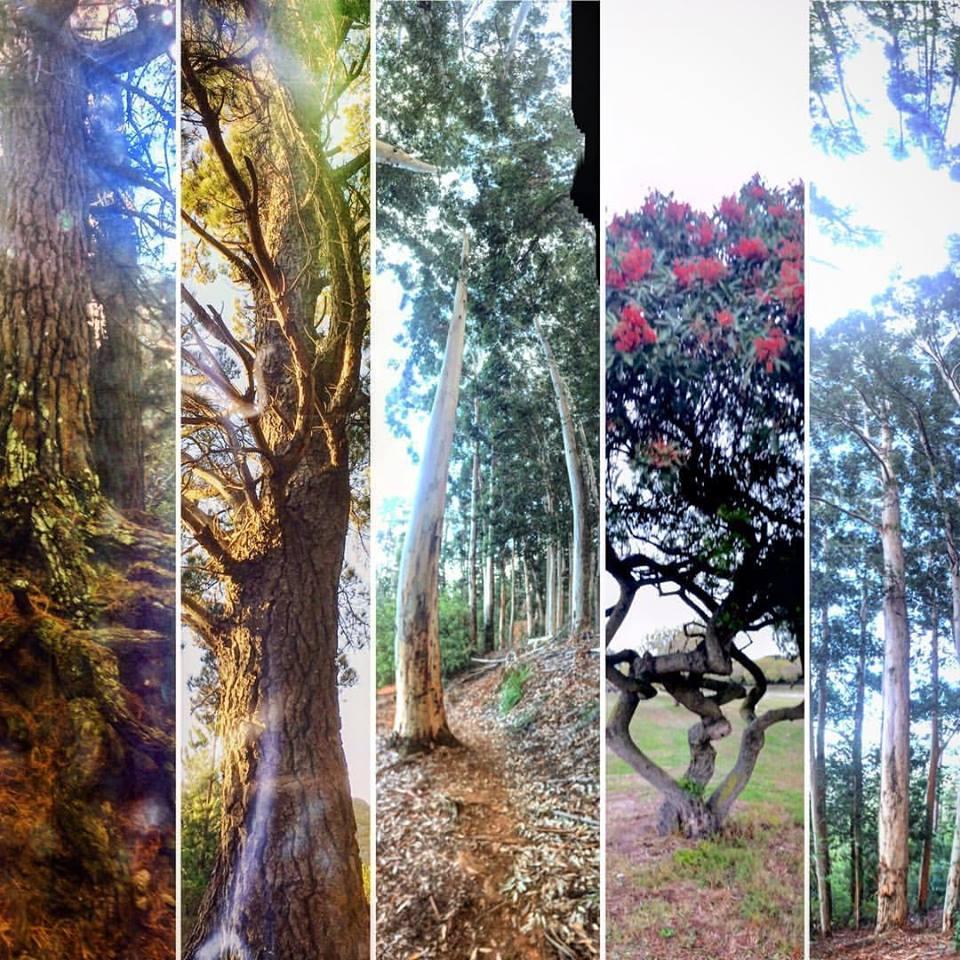 Photo Art. Nature Trees.